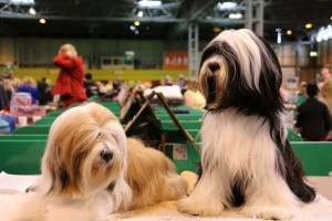 Lottie and kandi (1) Crufts 2016